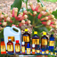 3ml-Essential-Oils-Many-Different-Oils-To-Choose-From-Buy-3-Get-1-Free thumbnail 29