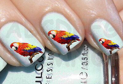 60x Water decals PAPPAGALLO UNGHIE NAIL ART ADESIVI PARROT STICKERS TRANSFERS