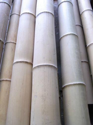 60-70 mm ! Bambusrohr Bambusstange Bambushalm Bambus Bambusrohre 5 x 6-7 x 2 m