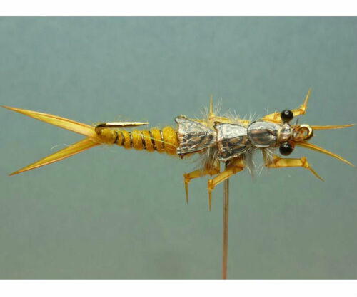 12 Artflies Realistic Golden Stonefly Nymph Assort Special /& Natural Park #12