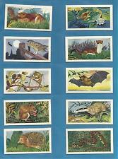 Cigarette/Trade cards...ANIMALS OF THE COUNTRYSIDE - 1959 Original Full set