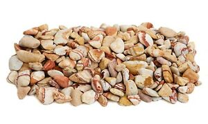 c95baef093b5a4 Image is loading 20kg-Rainbow-Pebbles-20-40mm-Ideal-for-gardens-