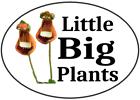 littlebigplants16