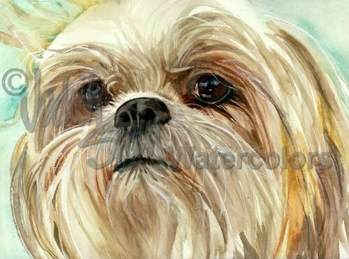 SHIH TZU Dog Art Print of WaterFarbe Painting Judith Stein Signed