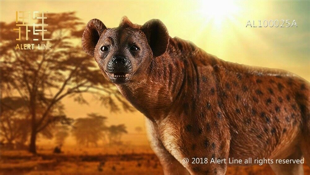 1 6 Scale Alert Line AL100025A Crocuta Crocuta Hund tiere Modell Sammlung Spielzeugs