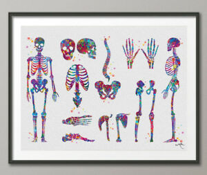 Spine Watercolor Print Skeletal System Medical Art Science Art Neurology Art