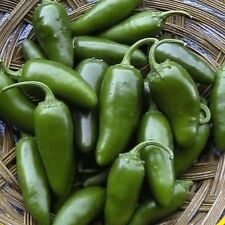 1/4 Lb Jalapeno Hot Pepper Seeds - Gold Vault Bulk Seed Packet