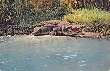 BR56436 Crok crocodile africa Animaux animals