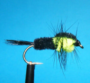 0-75-Stueck-2-Stueck-Montana-Green-Nymphen