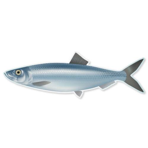 """Hareng poisson pêche Voiture Autocollant Fenêtre Autocollant 7/"""" X 2/"""""""