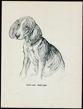 BEAGLE PUPPY LOVELY VINTAGE 1930'S DOG ART PRINT by KF BARKER
