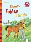Kleines Fohlen in Gefahr von Ulrike Kaup (2013, Gebundene Ausgabe)