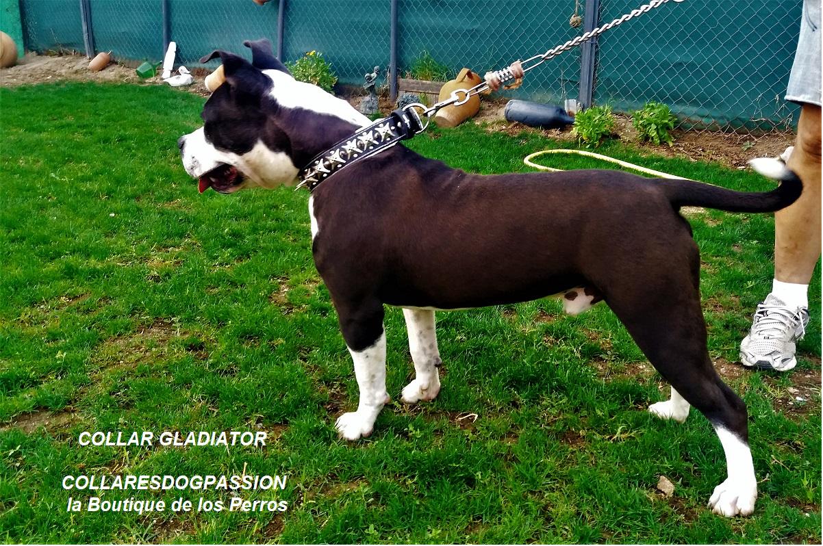 Collar para perros American Bully PitBull Bulldog Mastiff