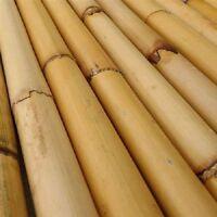 Rattan Bo Staffs Raw Staff Wholesale |48 To 72| Bamboomn