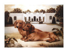 DACHSHUND SMOOTH SHORT HAIRED DAXI GERMAN SAUSAGE DOG FINE ART PRINT
