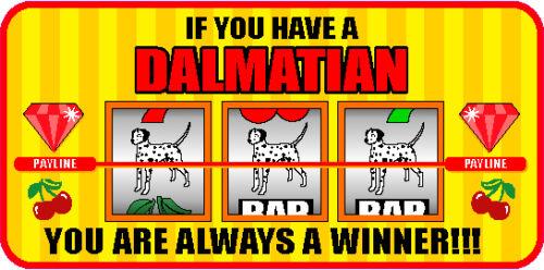 HAVING A DALMATIAN ALWAYS A WINNER VEGAS STICKER