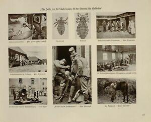 2019 Nouveau Style 1916 Wwi Ww1 Imprimé Allemand Magazine Pologne~tête Corps & Poux Soldats Chevaux