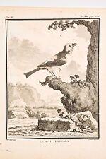 Histoire Naturelle Oiseaux Buffon v 1780 Mansard-De Sève, Le Petit Tangara