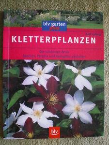 Kletterpflanzen Im Garten Spaliere Pergola Und Ranggitter