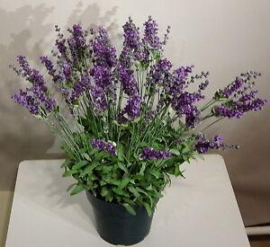 lavendel 50cm hoch im topf 4 st ck kunstpflanze kunstblumen ebay. Black Bedroom Furniture Sets. Home Design Ideas