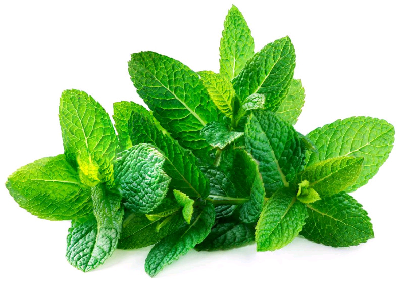 Spearmint (dried) ideal for herbal teas or herbal soaps.