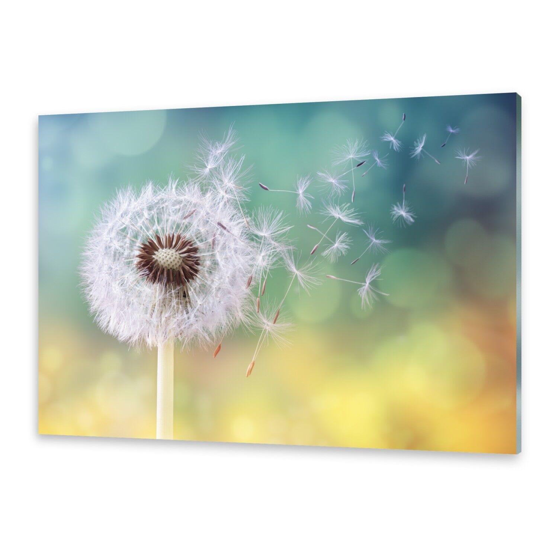 Vetro acrilico immagini Muro Immagine Immagine Immagine da plexiglas ® immagine Pusteblume b7e7c6