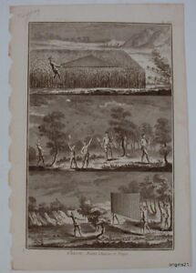 plate-TRAPPING-Hunting-Traps-antique-PRINT-birds-nets-torches-traps