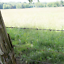 12-1//2 Gauge 2-Point Class I FARMGARD  Barbed Wire Fencing 1320 ft