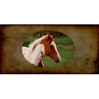 Paint Horse Photo License Plate