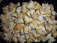 Fossilie Squalicorax Haifischzahn Anhänger Kette Shark Haizahn fossil shark