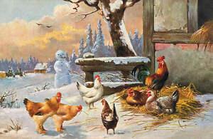 coops cluttered corner: winter scene | Winter scenes  |Winter Scenes With Chickens