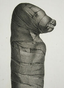 Egypt-Thebes-Hypogea-Mummy-Of-Woman-Cat-Mammals-c1810-Skull-Anatomy