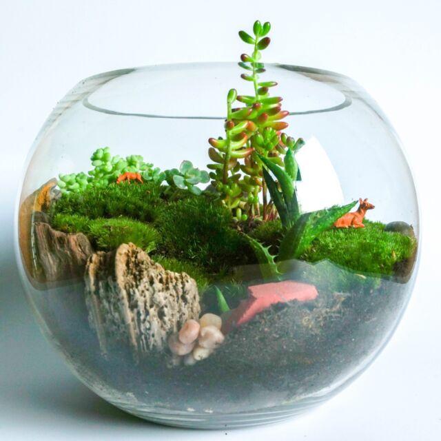 Succulent Cacti Terrarium Glass Kit Mini Garden Gifts Diy Activity
