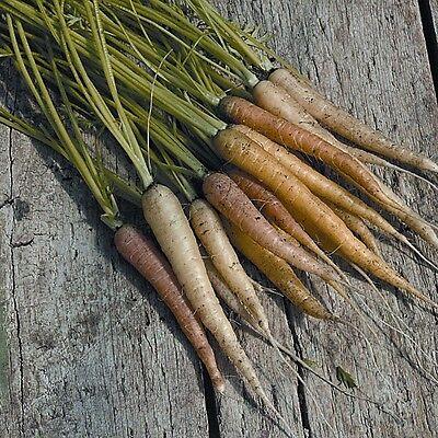 Vermetel Kings Seeds - Carrot Rainbow Mixed - 500 Seeds Mooi En Kleurrijk