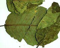 Graviola Soursop Whole Leaves