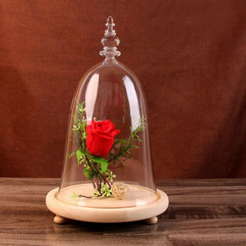 Rose Flower Glass Display Dome Cloche Bell Jar w// Wooden Base Home Decor Gift
