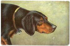 CHIEN DE CHASSE  . HUNTING DOG. PORTRAIT