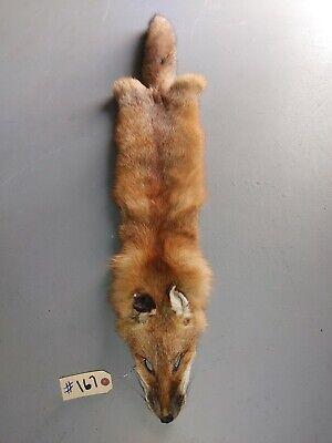 """Winter """"Heavy Fur,""""  large Grades 1 /& 2 Pelt Hide Tanned Red Fox Fur"""