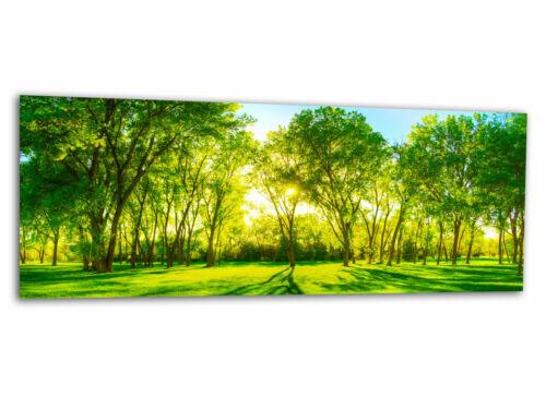 Glasbild Wandbild CENTRAL PARK NATUR Echtglas Foto auf Glas AG-00290 125 x 50cm