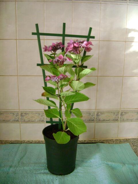 2 X Clip On Plastic Plant Pot Trellis Support For Climbing Plants