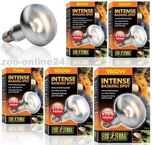 Exo-Terra-Intense-Tight-Beam-25-50-75-100-150-Watt-Waermestrahler-Terrariumlampe
