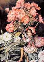 Flower Fairy Greeting Card - Cicely Mary Barker - Phlox Fairy - Birthday