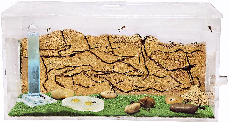 Ameisenfarm Starterkit (Ameisen mit Königin FREE)-Ant farm Formicarium Formicarium Formicarium Ant 0e2c61