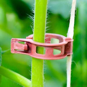 BIO-Tomatenclips (kompostierbar)