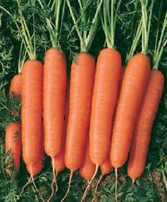 3,000 Carrot Seeds Scarlet Nantes garden seeds