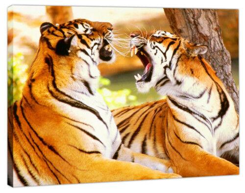 """Imagen Lienzo Arte Animal Tigre montado 30/"""" X 20/"""""""