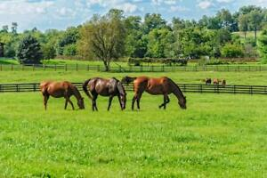 Thoroughbred-Horses-Grazing-in-Pasture-Photo-Art-Print-Poster-24x36-inch