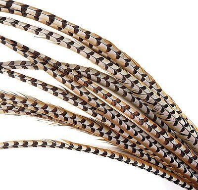 "5 Pcs REEVES PHEASANT Natural Feathers 4-10""; Craft/PadS/Hats/Halloween/Bridal"