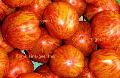 Rarität 10 frische Tomatensamen Samen rot gelb gestreifte süße Tomate  Tigerella