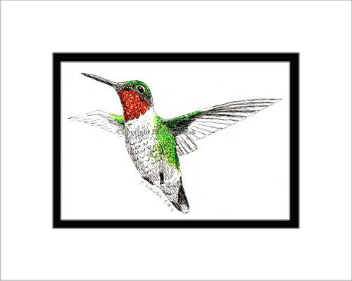 Ruby-throated Hummingbird Pen and Ink Matted Note Card